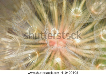 Dandelion seeds macro abstract blur. Transparent leaves and plant veins natural background. - stock photo