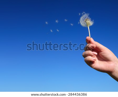 Dandelion spreading seeds in female hand on background of blue sky