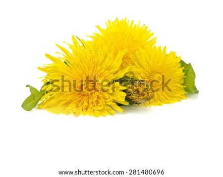 Dandelion (Taraxacum Officinale) flower on a white background     - stock photo