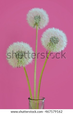 Dandelion with drops in vase on pink background