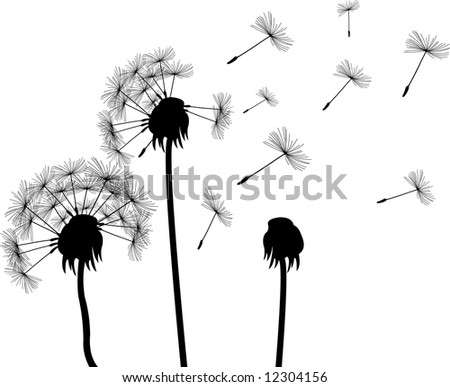 dandelions (for more see my port) - stock photo