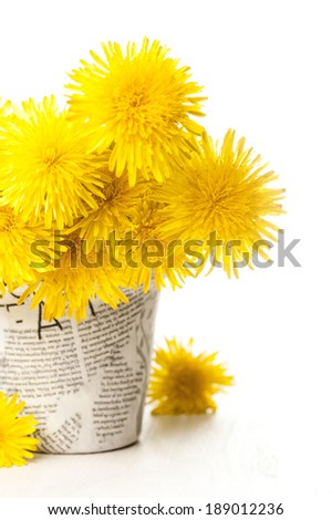 Dandelions in a news paper pot on a white wooden background  - stock photo