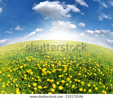 dandelions in the meadow with blue sky - stock photo