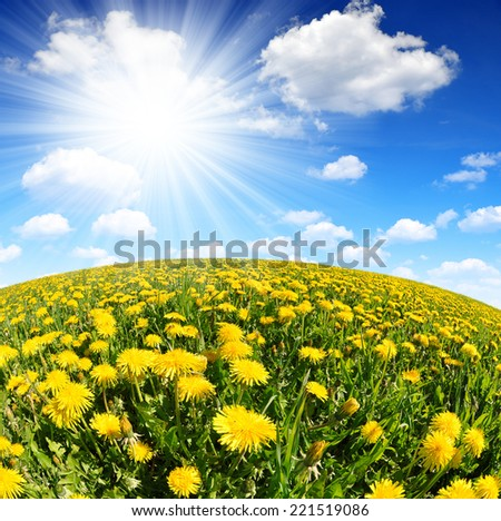 Dandelions in the meadow with sunny sky - Fisheye shot - stock photo