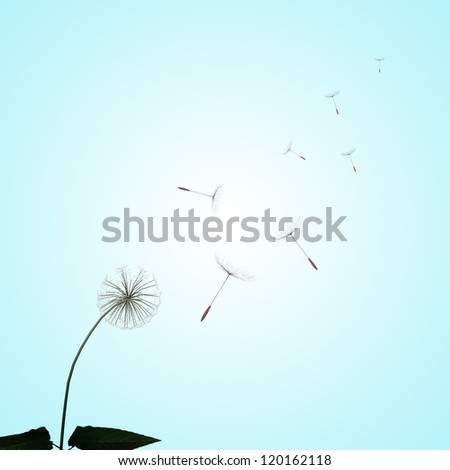 dandelions with nice background