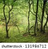 Danish beech forest at springtime. - stock photo