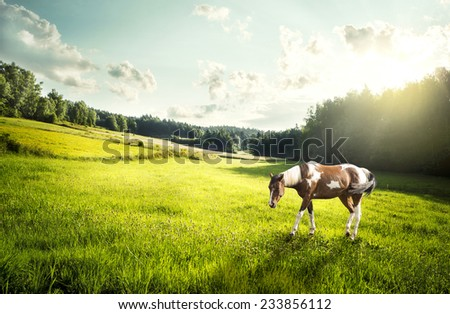 Dappled horse on a meadow in Poland in the morning - stock photo