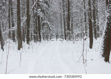 dark and moody winter forest. trees covered with snow