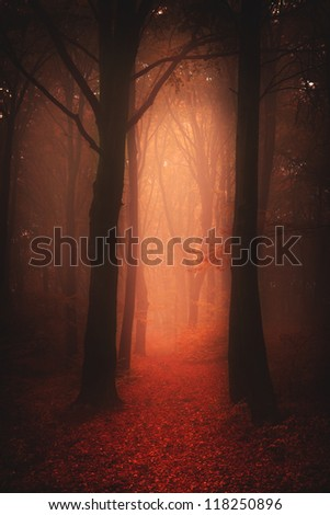 Dark autumnal forest in a foggy day | a concept for book and music albums covers - stock photo