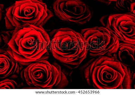 dark background with red roses. Rose background. - stock photo