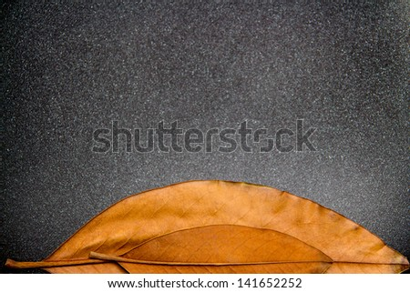 dark, black background with two old autumn leaves - stock photo