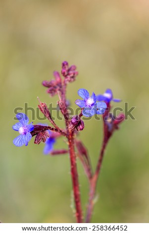Dark blue flowers on blurred background - stock photo