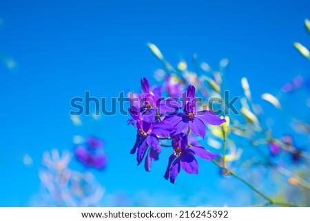 dark-blue flowers on the clear blue sky - stock photo