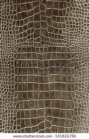 dark brown crocodile skin texture as a wallpaper - stock photo