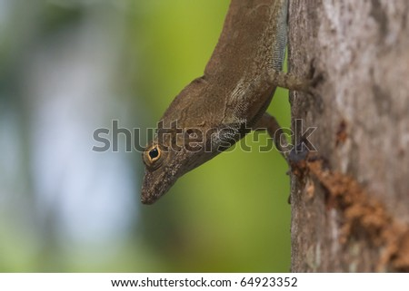 dark brown lizard on tree