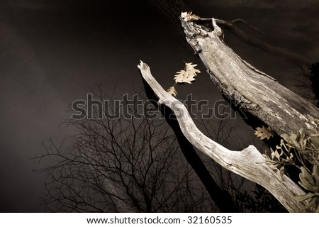Dark but serene winter scene - leaves and branches plus reflecting tree in a lake - stock photo
