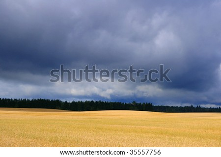 dark cloudy sky over yellow cereal field - stock photo