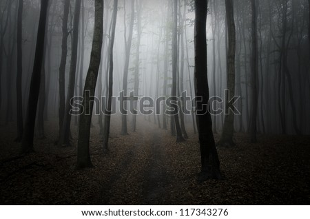 dark cold forest - stock photo