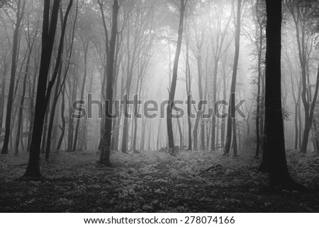 Dark creepy forest - stock photo
