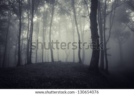 dark eerie forest - stock photo