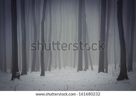 dark foggy forest in winter - stock photo