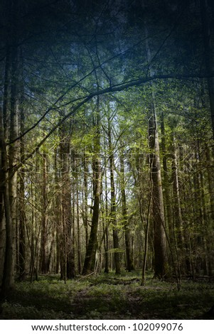 dark forest - stock photo