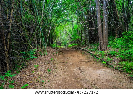 dark forest and a road - stock photo