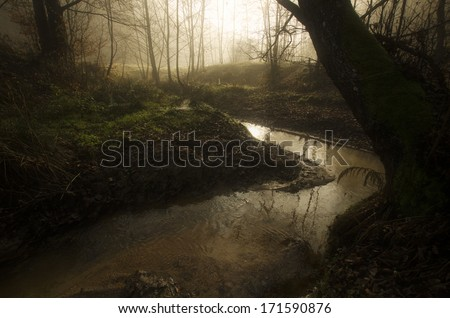 dark forest and river with golden light of morning glowing  - stock photo