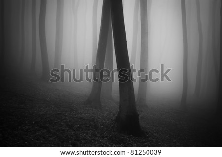 dark forest black and white - stock photo