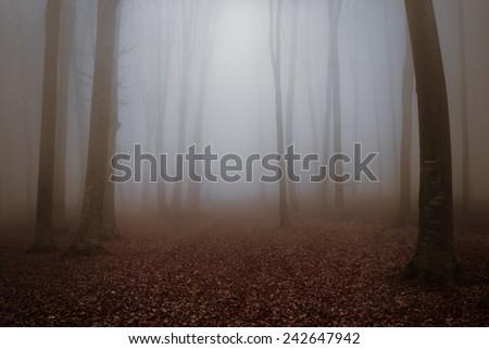 Dark forest in a misty autumn day - stock photo