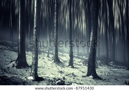 dark forest in winter - stock photo