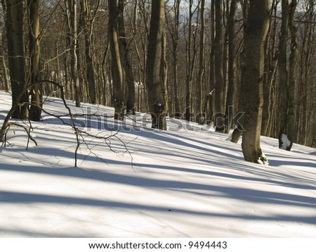 Dark forest in winter. Sunny day beauty shadows and white snow - stock photo