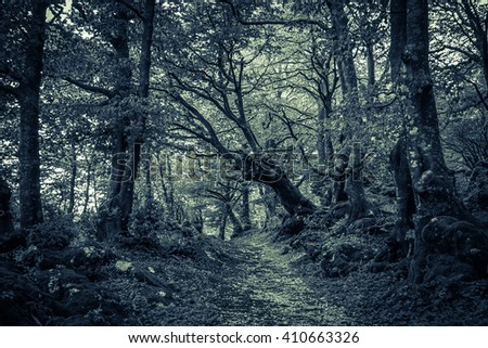 Dark forest infested by ghost in Transylvania