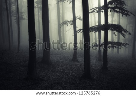 dark forest landscape - stock photo