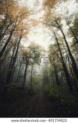 dark forest landscape - stock photo
