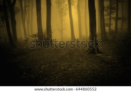 dark forest landscape with trees in fog