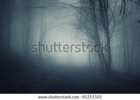 dark forest night landscape - stock photo