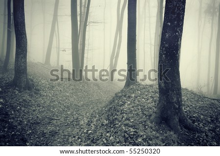 dark forest with fog between trees - stock photo