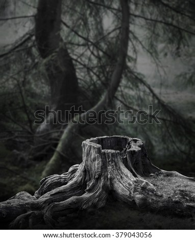 Dark forest with old tree stump and trees with moss in background - stock photo
