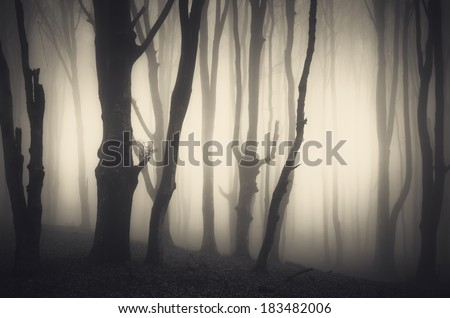 dark forest with scary twisted trees - stock photo