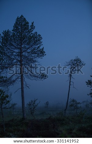 Dark forest with silhouette trees - stock photo