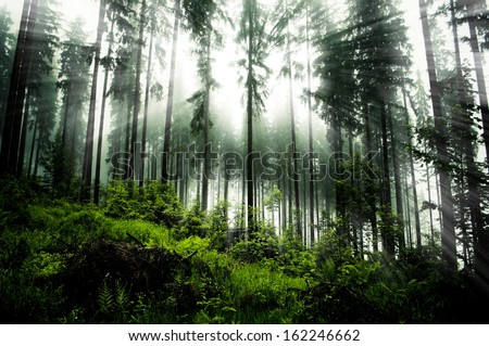 dark forrest on evening time - stock photo