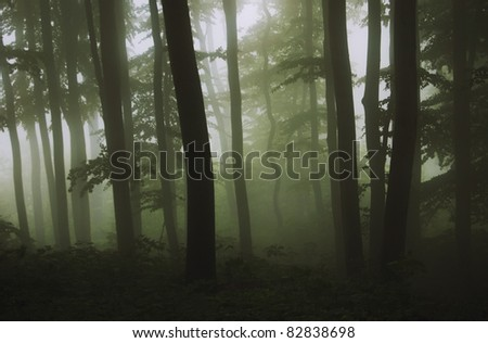 dark green forest