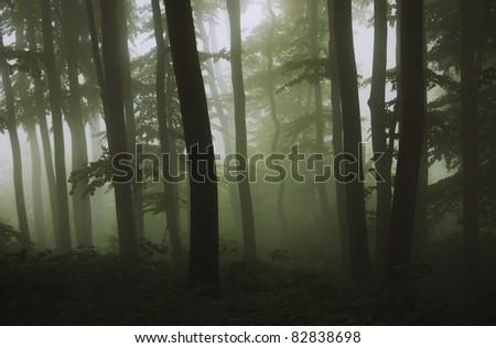 dark green forest - stock photo
