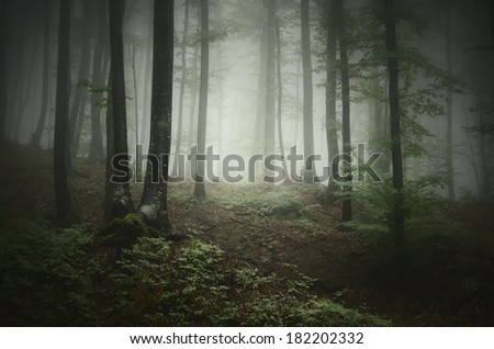 dark green forest with fog - stock photo