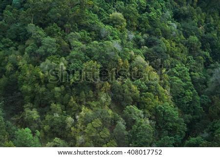 Dark green jungle trees aerial treetop view  - stock photo