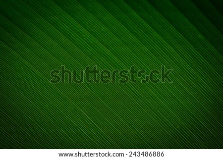 Dark green leaf texture with vignette, blurred - stock photo