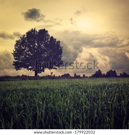 Dark Landscape with Lonely Tree and Moody Sky. HDR Cloudscape. Toned Photo. - stock photo