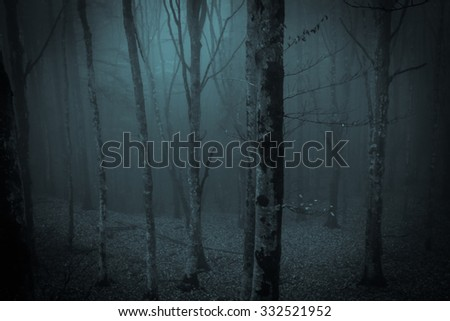 Dark night in the misty forest - stock photo