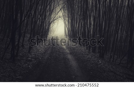 dark path through forest on halloween - stock photo